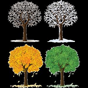 4SeasonTrees